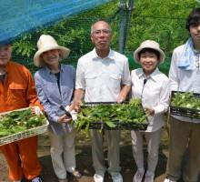 繭の収穫体験